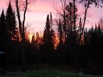 Żywy nocne niebo zdjęcia royalty free