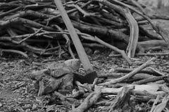 Yxan, svartvit bild arkivfoto