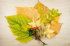 Yyellow, green autumn leaves, berries and seeds. Stock Images