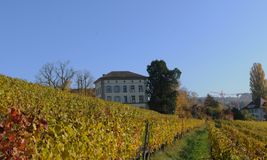 Zà ¼ bogactwo: Burghölzli kliniki wzgórze, dokąd fotografia royalty free