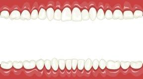 Zähne lizenzfreie abbildung