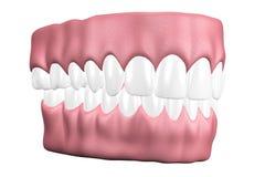 Zähne 3D schließen oben Lizenzfreies Stockfoto