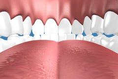 Zähne 3D schließen oben Stockbilder