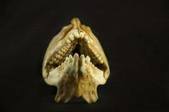 Zähne von Fischen Stockfotos