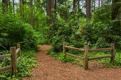 Zäune neben einem Erdweg im Wald lizenzfreie stockfotos