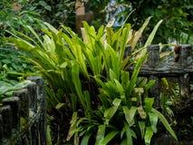 Zäunen Sie Anlagen und tropische Anlage am Hinterhof ein lizenzfreie stockbilder