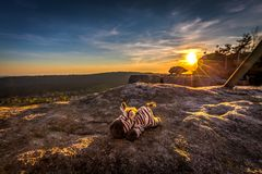 Zèbre bourré mignon de jouet se reposant dans les rayons d'or du coucher du soleil images stock