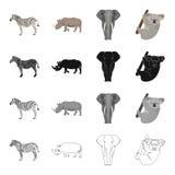 Zèbre d'animal sauvage, rhinocéros, éléphant, koala Les différents genres d'icônes réglées de collection d'animal dans la bande d illustration stock