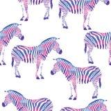 Zèbre géométrique de couleurs multi Photos stock