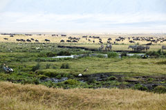 Zèbres, gnous, hippopotames, oiseaux sur le cratère de Ngorongoro Photos stock