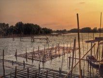 Züchtende Anlage der Auster Stockfotografie
