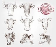 Züchtende Kühe Lizenzfreie Stockfotografie