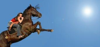 Züchtung des Pferds stockfotos