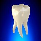 Ząb anatomii Molarny Zdrowy pojęcie Zdjęcie Royalty Free