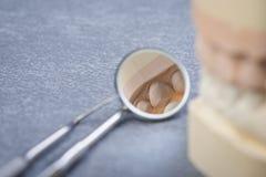 Ząb foremka z stomatologicznymi narzędziami Fotografia Stock