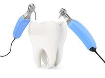 Ząb i stomatologiczni instrumenty Zdjęcie Royalty Free