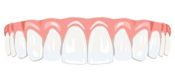 Zębów dziąsła Zdjęcie Stock