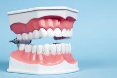 zęby Zdjęcia Royalty Free