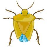 Zła insekt pluskwa ilustracji