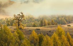 Zła pogoda z śniegiem w drewnach żółtych Obrazy Royalty Free