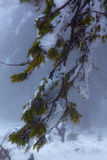 złamany drzewo Zdjęcie Stock