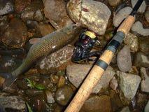 Złapana ryba na przędzalnictwie Zdjęcia Royalty Free