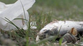 Złapany poruszający na trawie na śmieciarskim tle i zdjęcie wideo
