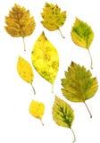 złożone liście jesienią Fotografia Stock