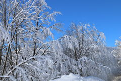 26 złożonego cyfrowego ogromnego mpix panoramicznego strzału rozmiaru śnieżnych drzew Zdjęcie Stock