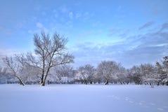 26 złożonego cyfrowego ogromnego mpix panoramicznego strzału rozmiaru śnieżnych drzew Zdjęcia Stock