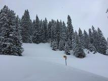 26 złożonego cyfrowego ogromnego mpix panoramicznego strzału rozmiaru śnieżnych drzew Fotografia Stock
