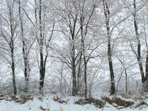 26 złożonego cyfrowego ogromnego mpix panoramicznego strzału rozmiaru śnieżnych drzew Obrazy Stock