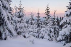 26 złożonego cyfrowego ogromnego mpix panoramicznego strzału rozmiaru śnieżnych drzew Fotografia Royalty Free