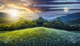 Złożony krajobraz z lasem w górach Obraz Royalty Free