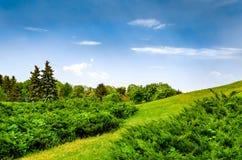 Złożony lato krajobraz na zbocze łące Obraz Royalty Free