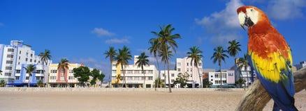 Złożony panoramiczny wizerunek kolorowa linia brzegowa w Miami plaży i papuga, Floryda zdjęcie royalty free