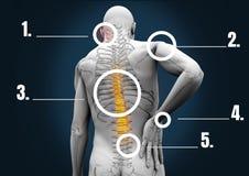Złożony wizerunek ludzka kości struktura royalty ilustracja