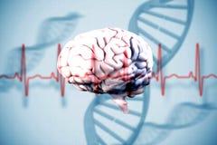 Złożony wizerunek mózg ilustracja wektor