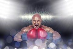 Złożony wizerunek napina mięśnie agresywny bokser Zdjęcie Royalty Free
