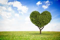 Złożony wizerunek serce kształtująca roślina Obraz Royalty Free