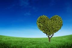 Złożony wizerunek serce kształtująca roślina Zdjęcia Stock