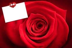 Złożony wizerunek zakończenie up czerwieni róża Zdjęcia Royalty Free