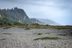 Złociści blefy wyrzucać na brzeg blisko złotej godziny, gdy mgła zaczyna staczać się wewnątrz na Północnego Kalifornia linii brze fotografia royalty free