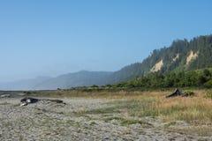 Złociści blefy wyrzucać na brzeg blisko złotej godziny, gdy mgła zaczyna staczać się wewnątrz na Północnego Kalifornia linii brze zdjęcie stock