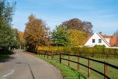 złociści jesień liść niektóre drzewa Zdjęcia Royalty Free