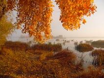 złociści jesień liść niektóre drzewa Fotografia Royalty Free