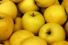 Złoci Żółci jabłka zdjęcie stock