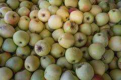 Złoci i wyśmienicie jabłka Obrazy Royalty Free