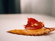 Złoci jesień liście na górze białego stołu obok okno obrazy royalty free