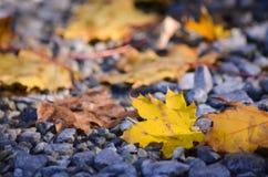 Złoci jesień liście na ziemi Obrazy Stock